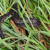 ...and, shudder, this python snake!