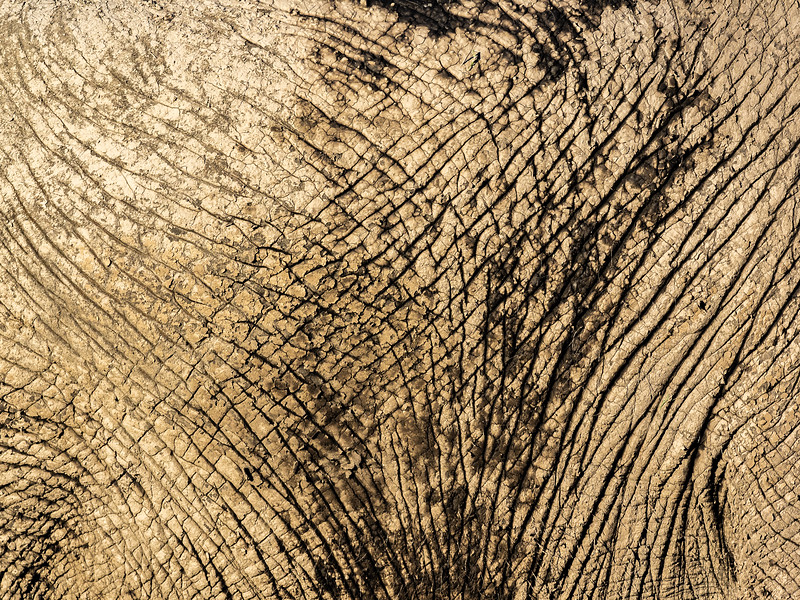 The hide of an elephant, observed from close up, becomes abstract and can represent anything you can imagine.  To me, this looks like the cracked mud of a desert floor.