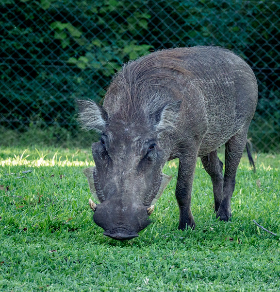 ...and this warthog