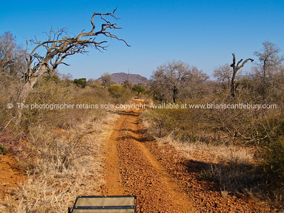 A typical South African bush road, dirt,gravel and dusty, with the dry vegetaion and brush on either side. SEE ALSO: www.blurb.com/b/685976-africa