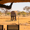 "Is this danger I see? Elephant heads toward the lodge. SEE ALSO:  <a href=""http://www.blurb.com/b/685976-africa"">http://www.blurb.com/b/685976-africa</a>"