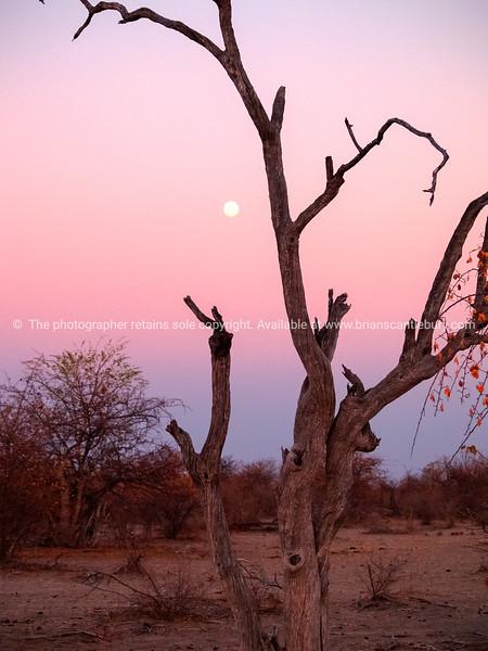 Sunset in bush Botswana.