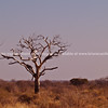 """Dry African Landscape, with light catching a dead tree. SEE ALSO:  <a href=""""http://www.blurb.com/b/685976-africa"""">http://www.blurb.com/b/685976-africa</a>"""