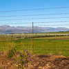 "Through the fence, rural South Africa. SEE ALSO:  <a href=""http://www.blurb.com/b/685976-africa"">http://www.blurb.com/b/685976-africa</a>"