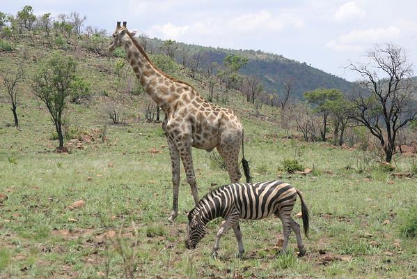 Africa 2001