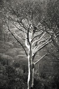 Solo Tree #2_0590B-2