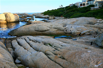 Penguins at Boulders Beach_0730B-2