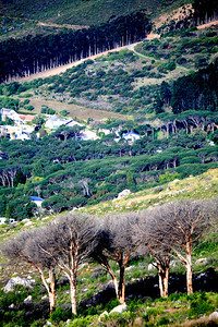 Tree Lines at Table Mountain_0599B copy-2