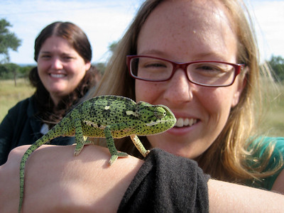 Chameleon, Botswana