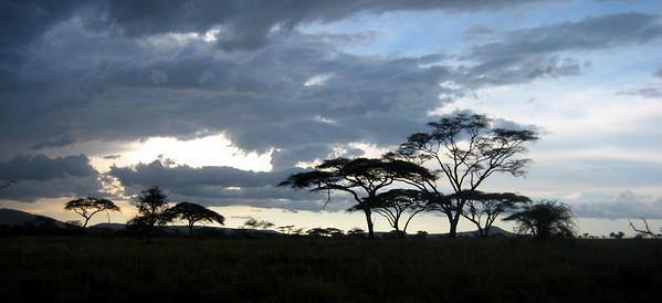 Dusk landscape, Serengeti, Tanzania