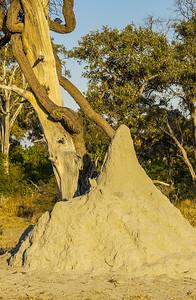 Massive Termite Mound
