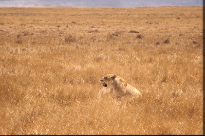Africa_1991