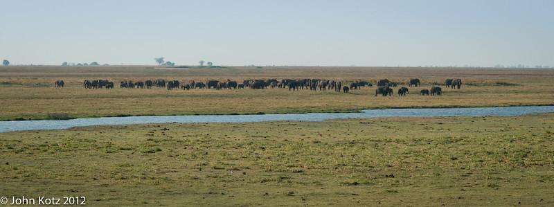 Elephants on the plains near the Chobe River in northern Botswana.