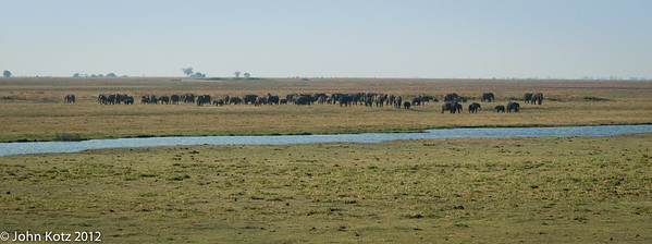Elephants on the plains near the Chobe River in northern Botswana.