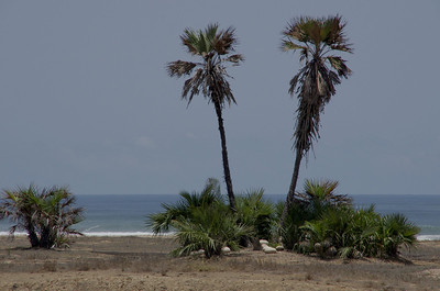 Coast south of Luanda