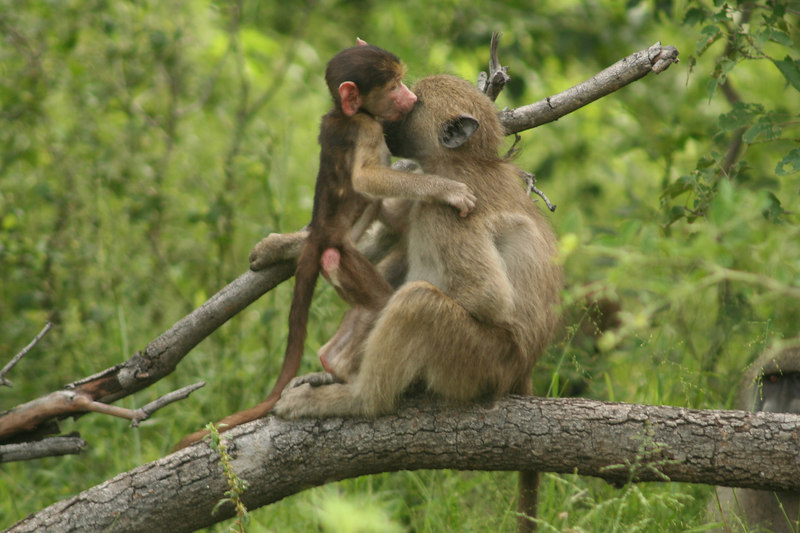 Give Mama a Kiss!