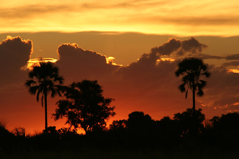 Fiery Sunset in the Okavango