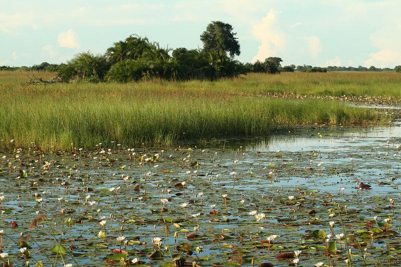 Okavango Waterway