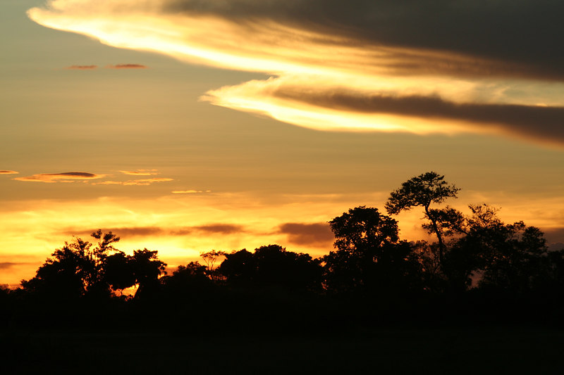 Evening at Tubu Tree