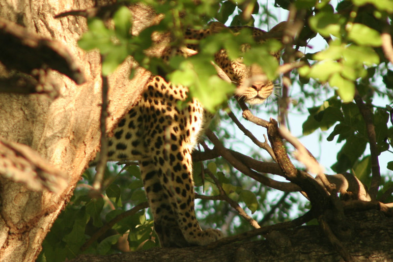 First Glimpse of Leopard