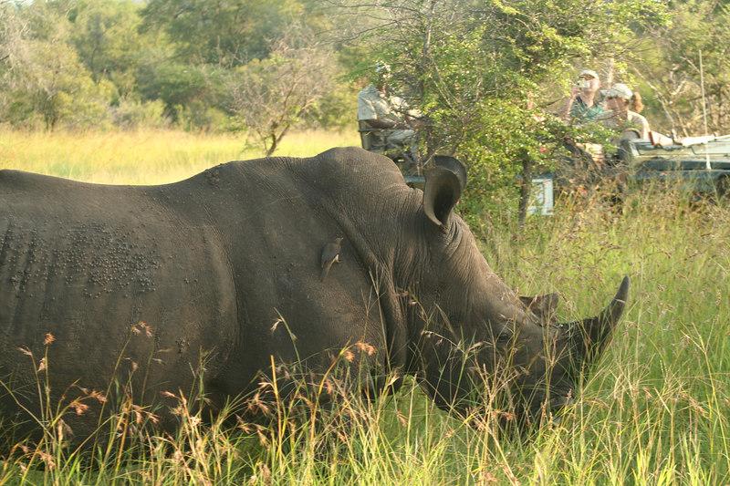 Rhino Viewing