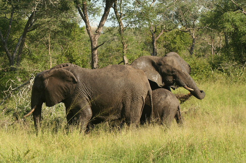 Elephant Mudbath