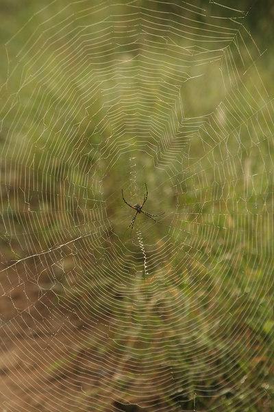 Spiderweb on a Foggy Morning