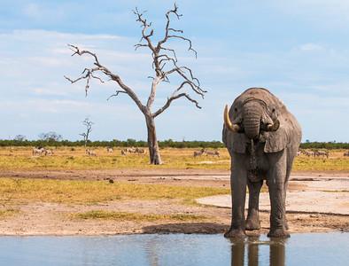 Elephants-29