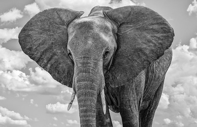 Elephants-17