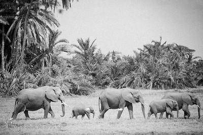 Safari-B&W-026