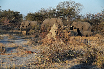 EPV0903 Elephant Family