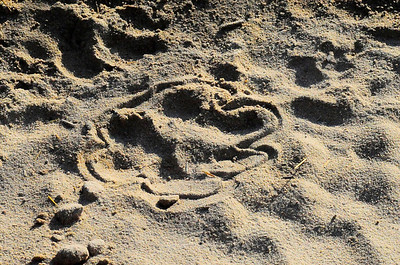 EPV0001 Large Cat Footprint (outlined by guide)