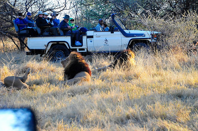 EPV1185 Mobile 2 with Lions