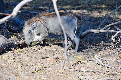 EPV0163 Pretty Little Fella -- Warthog