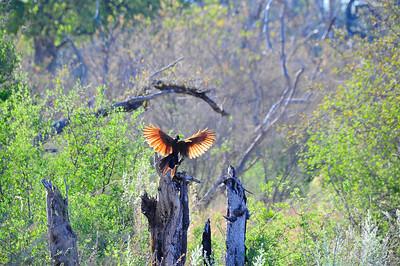 EPV0105 Landing on Tree Stump