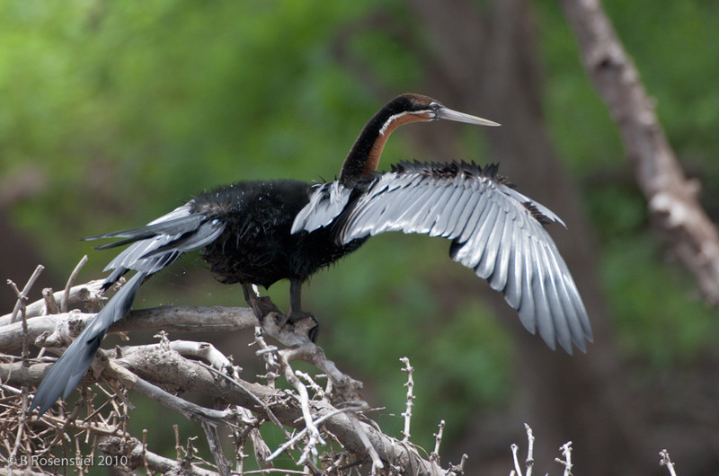 Chobe National Park, Botswana, 2008