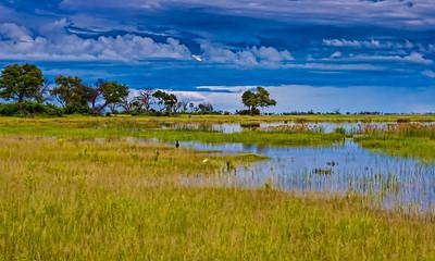 Duma Tau, Savuti Channel, Botswana, 2008