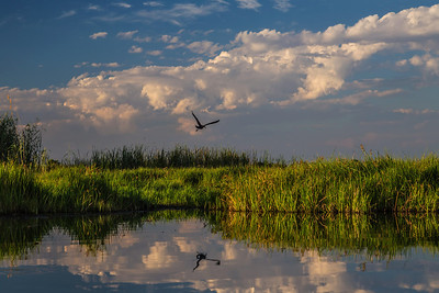 Okavango Delta, Botswana Late in the day a bird flies over the Okavango Delta.