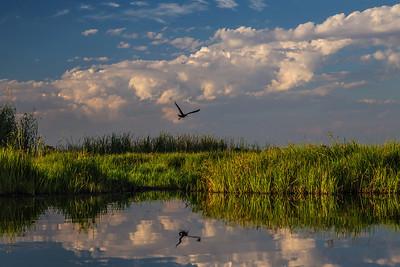 Okavango Delta, Botswana Late in the day a bird flies over the Okavango Delta.