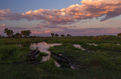 Okavango Delta, Botswana Our Makoro Canoes parked in the channels of the Okavango Delta..