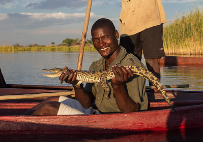 Okavango Delta, Botswana Our guide holds up a small crocodile that was caught in a fishing net on the Okavango Delta.