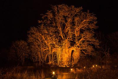 Botswana A Baobab Tree in northern Botswana.