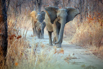 Our daily dose of elephants were always awe inspiring.