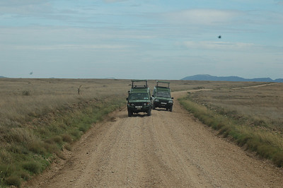 Leaving Nakuru, we have a long drive into the Maasai Mara Game Reserve.  Here  we scan the far distance for raptors and  hornbills, as well as warthogs, rhinos, elephants, and more.