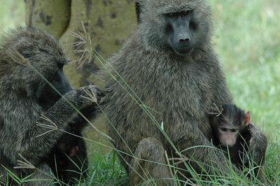 While here, relaxing on my hotel room porch, I found myself face to face with two baboons.