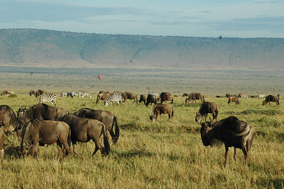 Just outside the hotel window is the vast Mara-Serengeti grassland. The waves of animals and hills resemble the rolling sea.