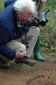 On an easy hike along the mountainside, we found African paradise flycatchers, Hartlaub's turaco, and several species of brilliant sunbirds. But Chris Leahy, the Mass Audubon leader, delights in all aspects of nature, including the dramatic march of army ants.