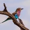 Bird :-)
