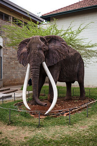 A final elephant - in the museum