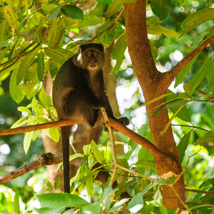 We saw very few monkeys. Unlike the in the Kruger National Park, they have not been fed by humans, and so stay away